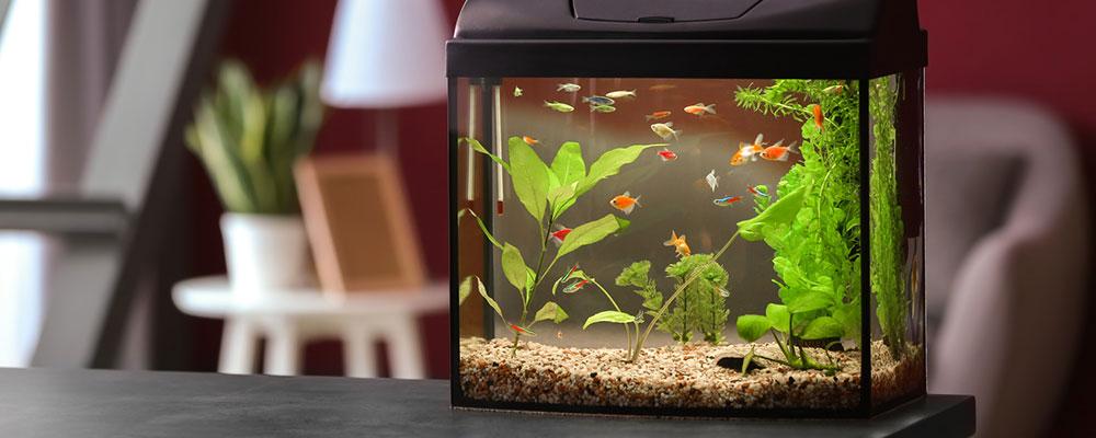 Beim Einrichten des Aquariums solltest du auf die Wahl des richtigen Standorts achten.