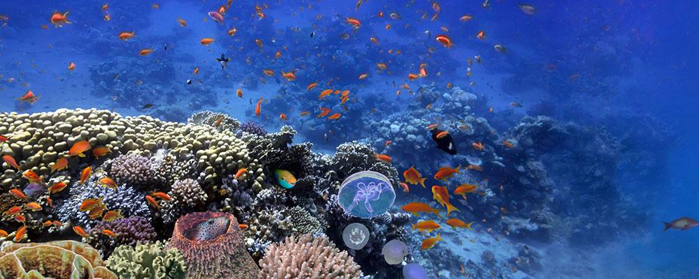 Mit unseren Tipps gelingt dir der Einstieg in die Aquaristik.