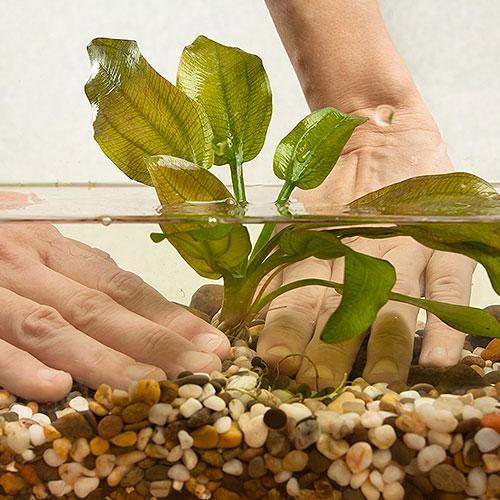 Wasserpflanzen einsetzen